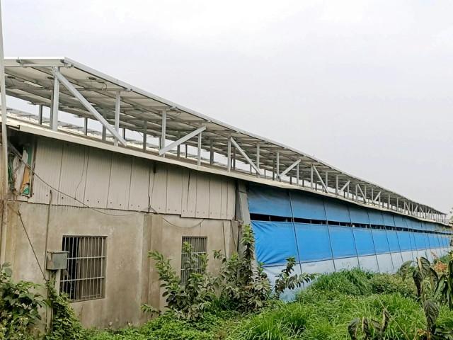 七股合法養殖合法養豬場,台南市七股區看坪里