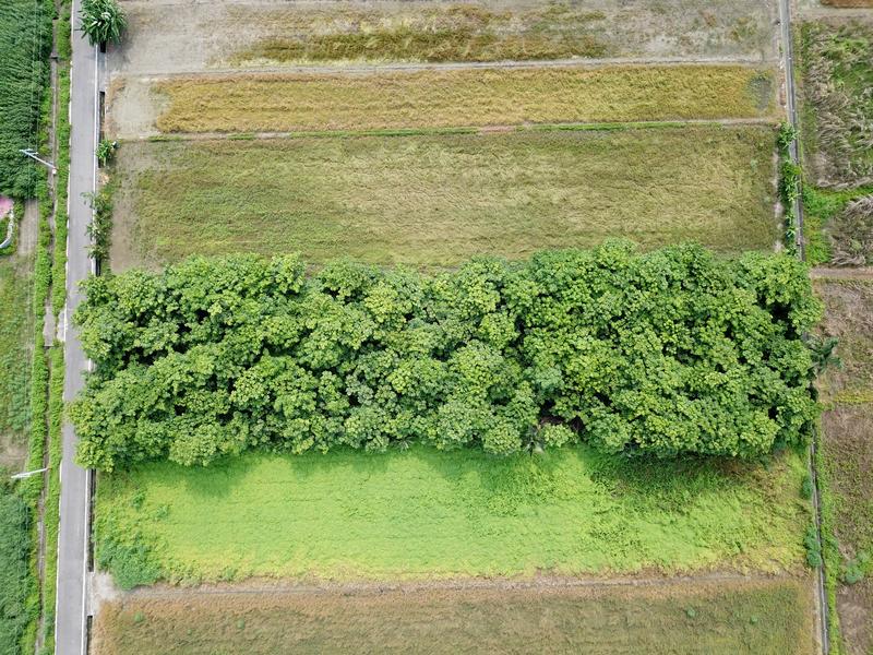 昭明後漂亮樹林農地,台南市七股區三合段