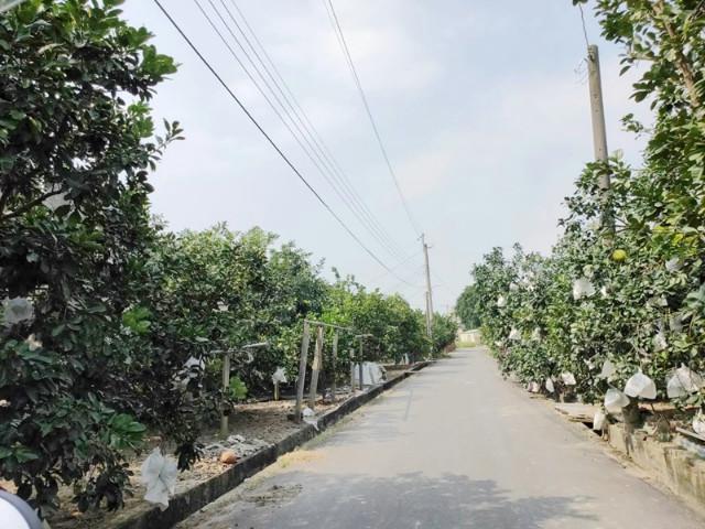 十八年柚子園(三),台南市麻豆區謝厝寮段