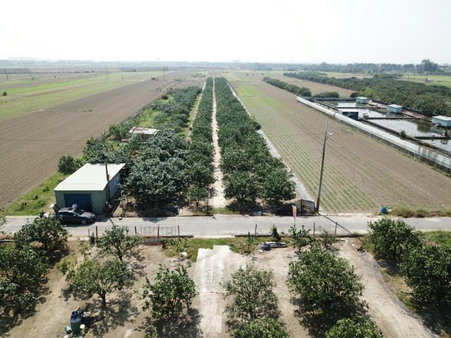 十八年柚子園(一),台南市麻豆區謝厝寮段