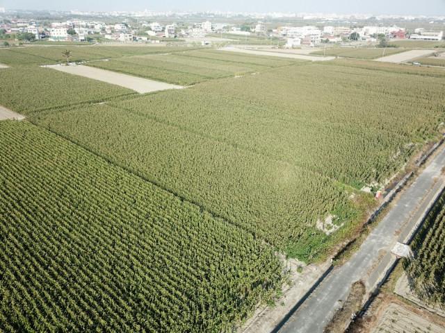 三合段學區旁美田,台南市七股區三合段