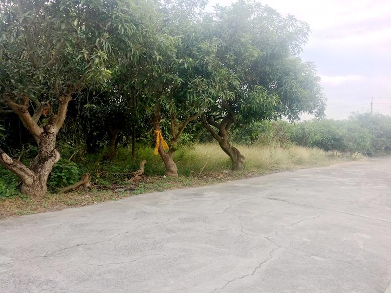 番子渡頭段漂亮園野,台南市官田區番子渡頭段